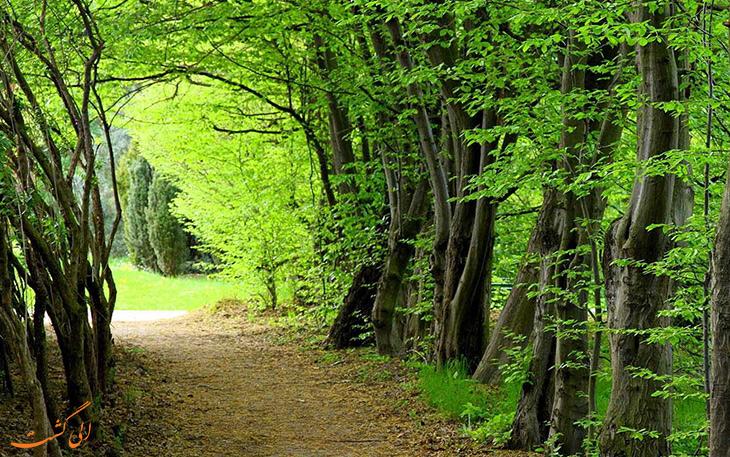ثبت جنگل های هیرکانی در یونسکو