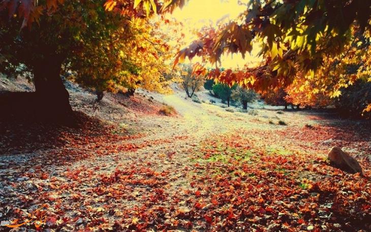 پاییز در تنگ گنجه ای در یاسوج