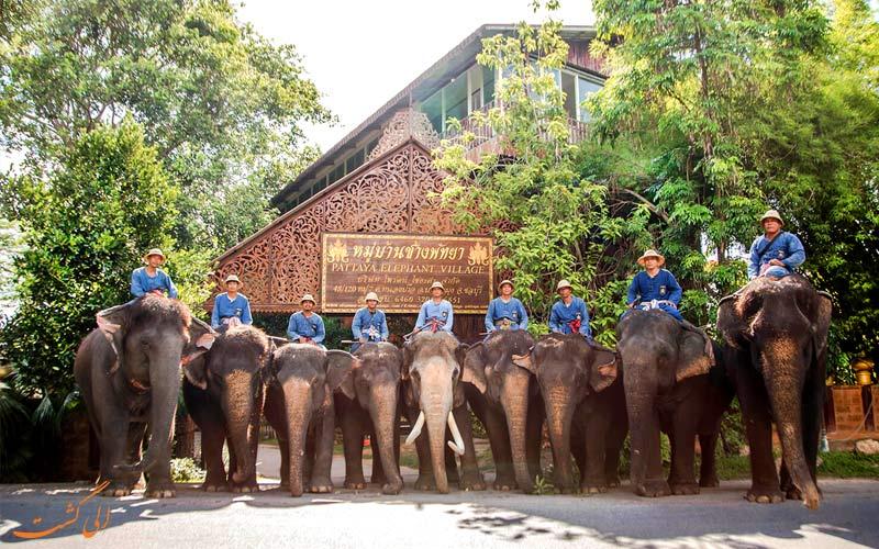 پناهگاه فیل های پاتایا