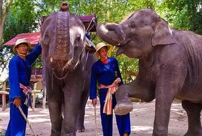 دهکده فیل های پاتایا-الی گشت