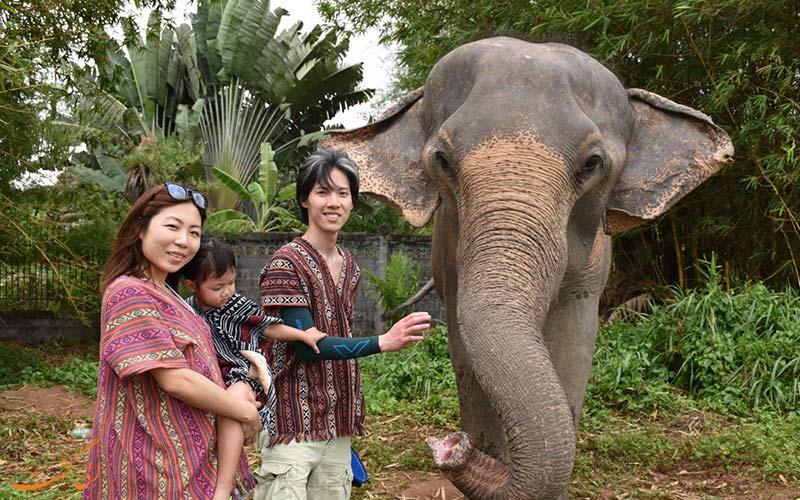 لباس محلی تایلند و فیل ها