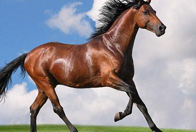 نژادهای اسب ایرانی