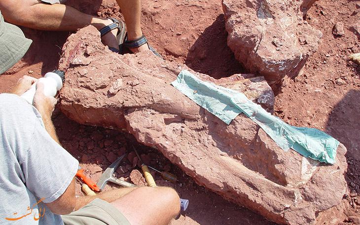استخوان دایناسور