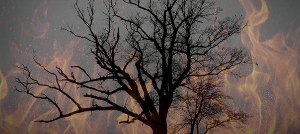 درخت شیطان، نماینده ای از جهنم بر روی زمین!