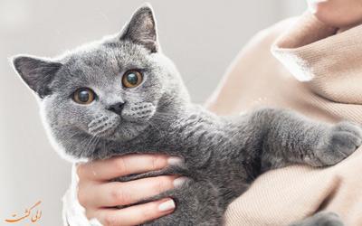 معروف ترین نژادهای گربه در جهان