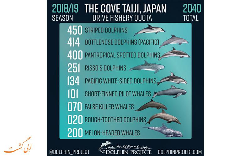 آماری از قتل عام و کشتن دلفین ها در تایجی ژاپن