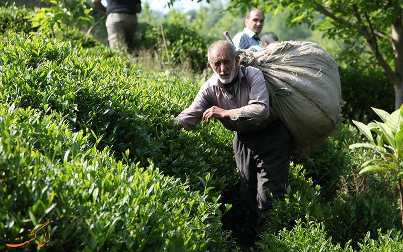ایران-چای