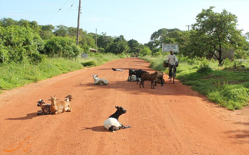 جاذبه های زنگبار تانزانیا-زمان