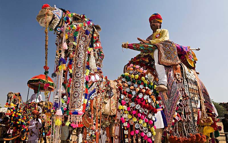 تزئینات شترها در جشنواره شتر هند