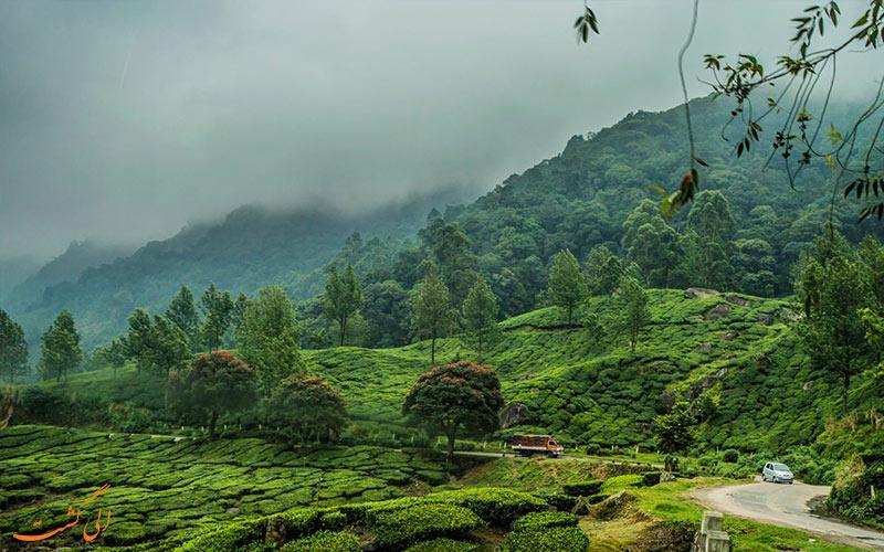 نمایی از مزارع چای هند-مونار Munnar