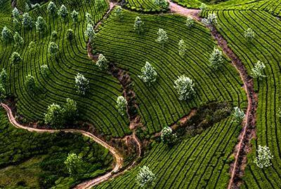 مونار و جاذبه های مزارع چای-هند