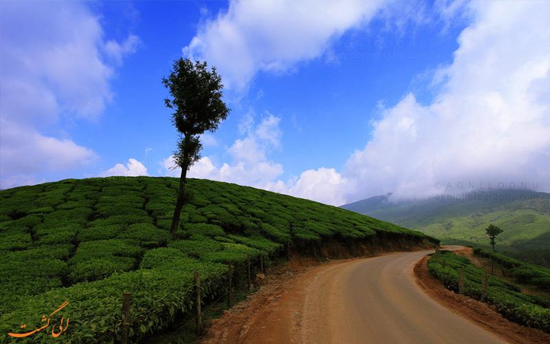 مونار هند و مزارع چای