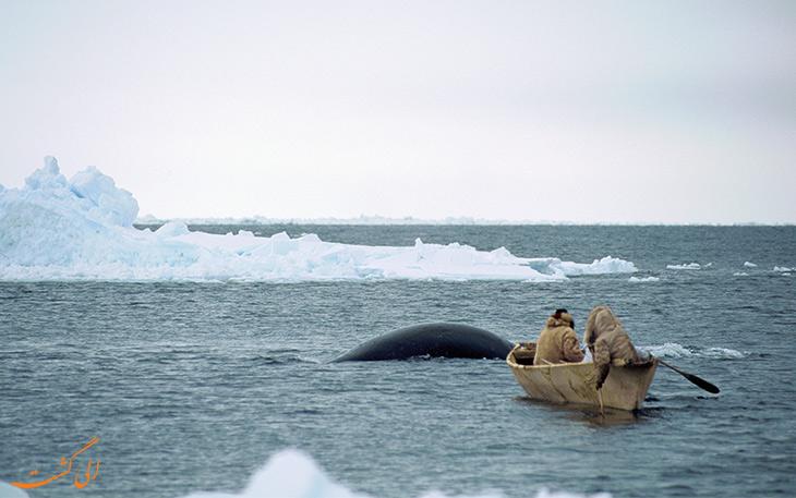شکار مدرن نهنگ