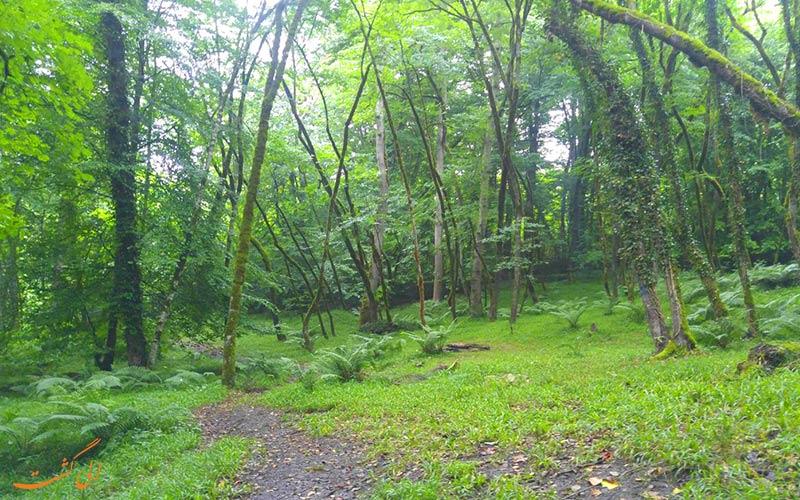 راه دسترسی به جنگل انجیلی