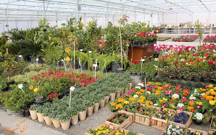 خرید گل از تهران