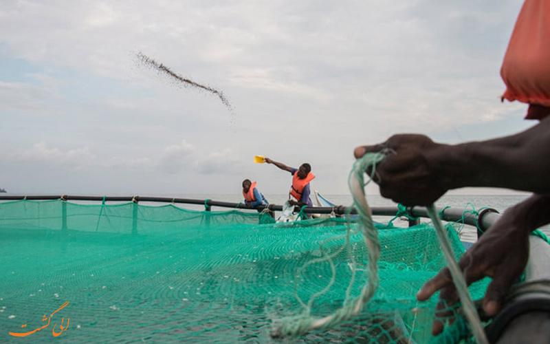 پر جمعیت ترین جزیره ی دنیا، میگینگو