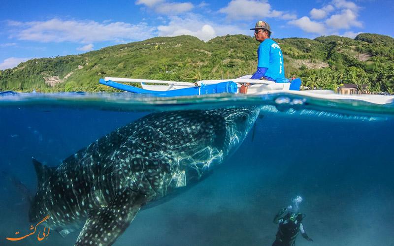 کوسه نهنگ ها