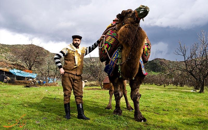 صاحبان شترها در مسابقه کشتس شترها در ترکیه