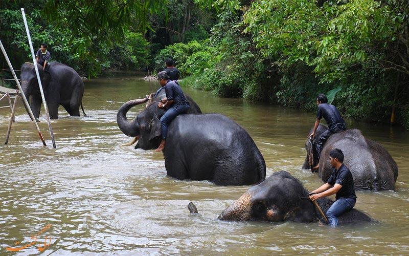 مرکز حفاظتی فیل کوالا گاندا- گیتینگ هایلند مالزی