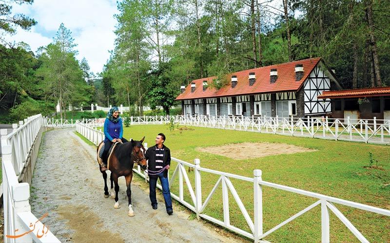 مزرعه-اسب-سواری-آوانا