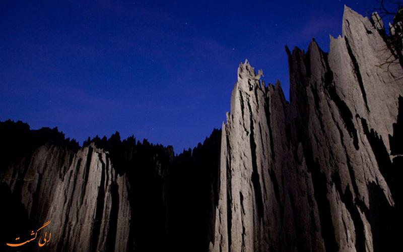 جنگل سینجی
