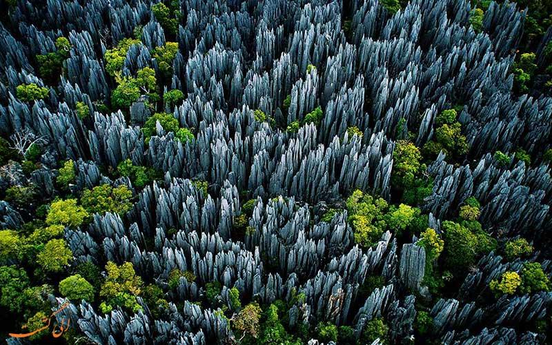 جنگل سینجی در ماداگاسکار