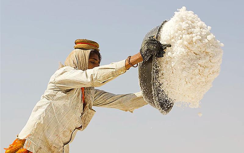 برداشت نمک از کویر نمکی هند