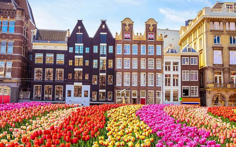 زندگی در آمستردام، شهر گل ها