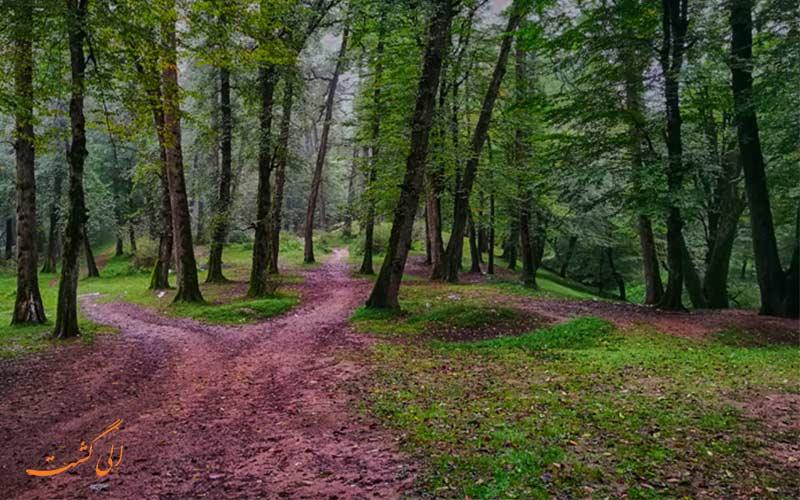 جنگل دالخانی از زیباترین جنگل های شمال