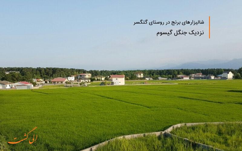 از بهترین روستاهای شمال ایران برای زندگی
