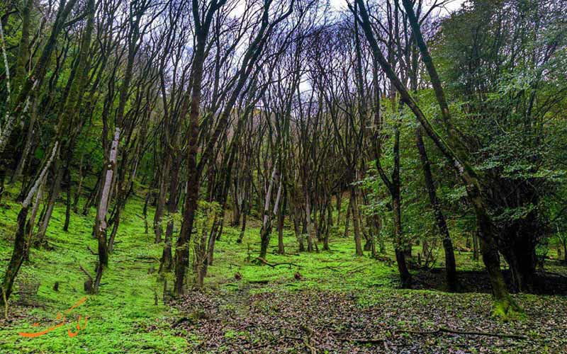 ارزشمندترین و بهترین جنگل های شمال