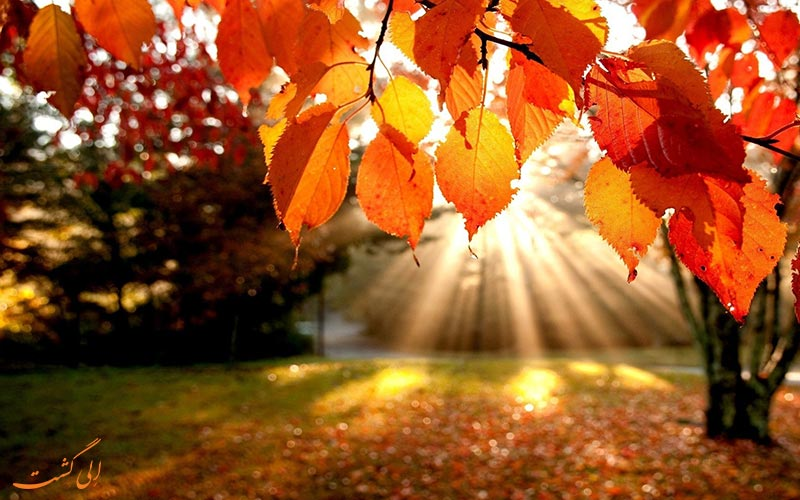 پاییز، فصل دلانگیز سفر