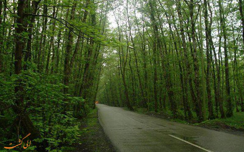 نمایی از جاده ای در جنگل گیسوم